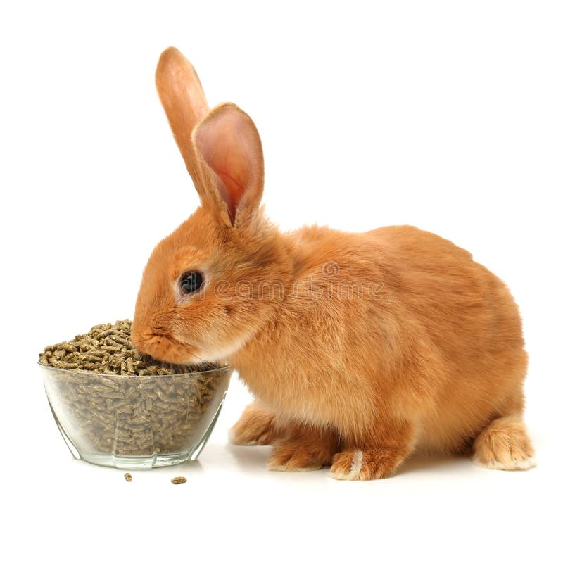 Bunny, pet food. Isolate white background royalty free stock image