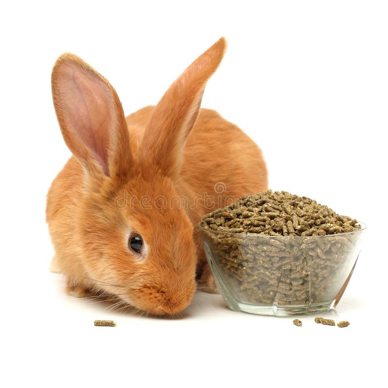 Bunny, pet food. Isolated on white background royalty free stock photo