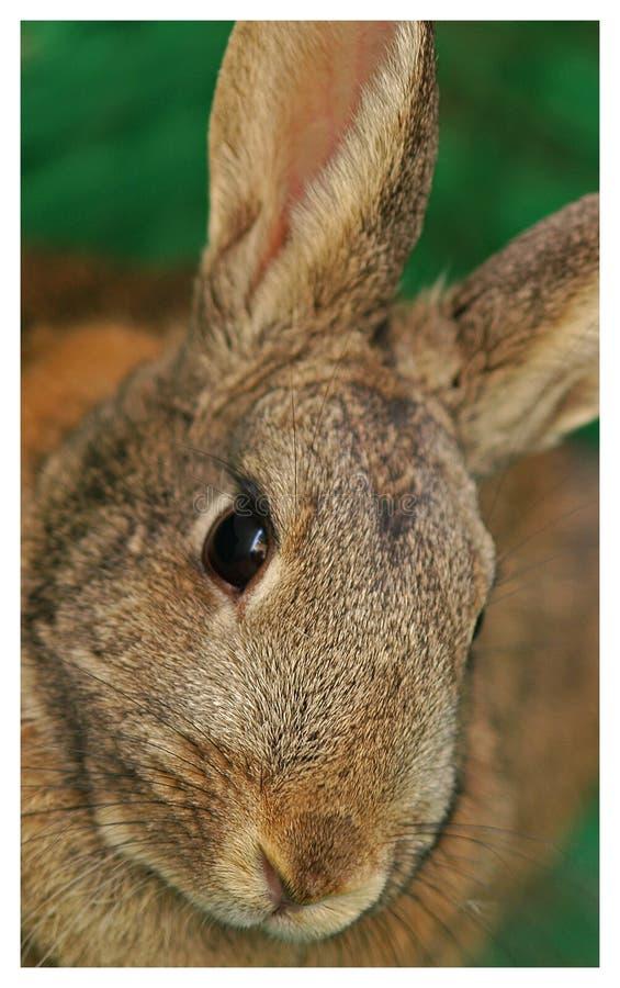 Bunny Portrait Stock Photo