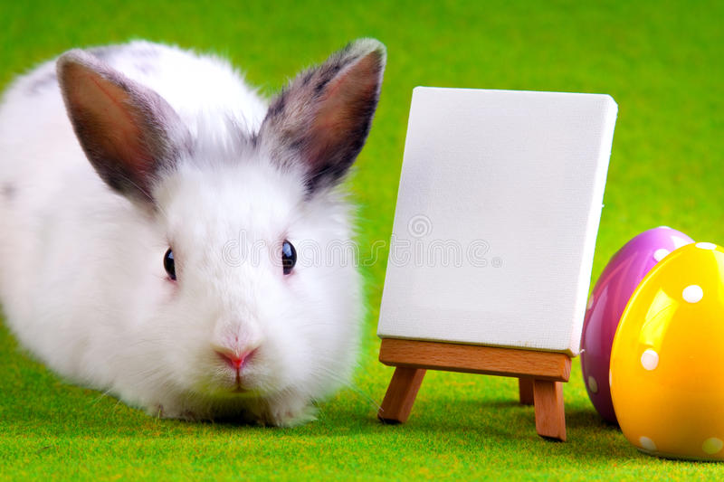 Bunny Rabbit. Easter Concept! White Bunny Rabbit witch table and eggs. Placed on green stock photography