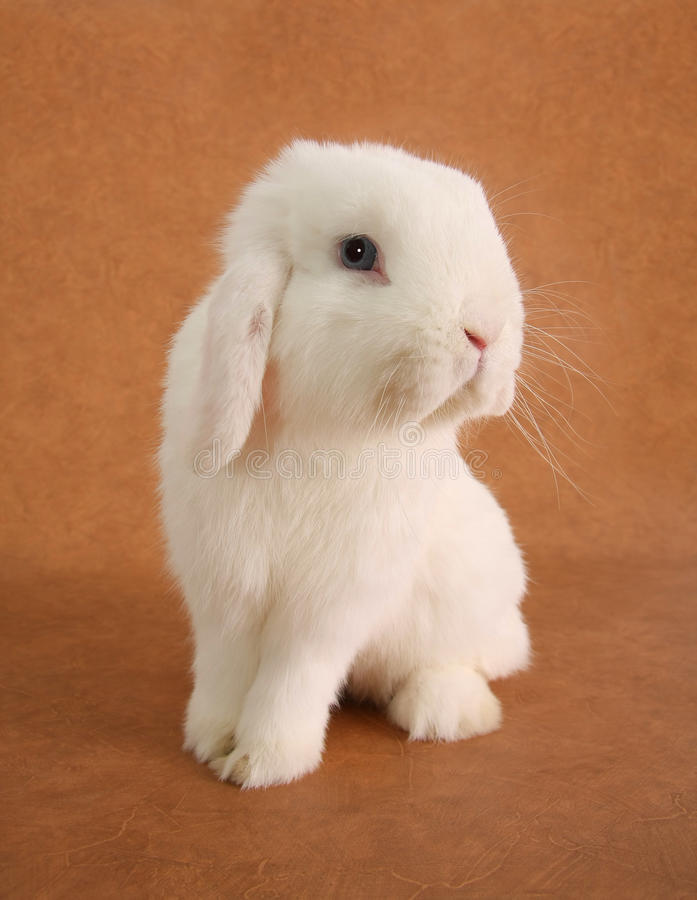 Bunny rabbit. White little bunny rabbit portrait stock image