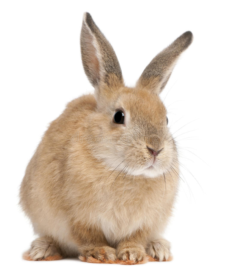 Bunny rabbit. In front of white background stock images