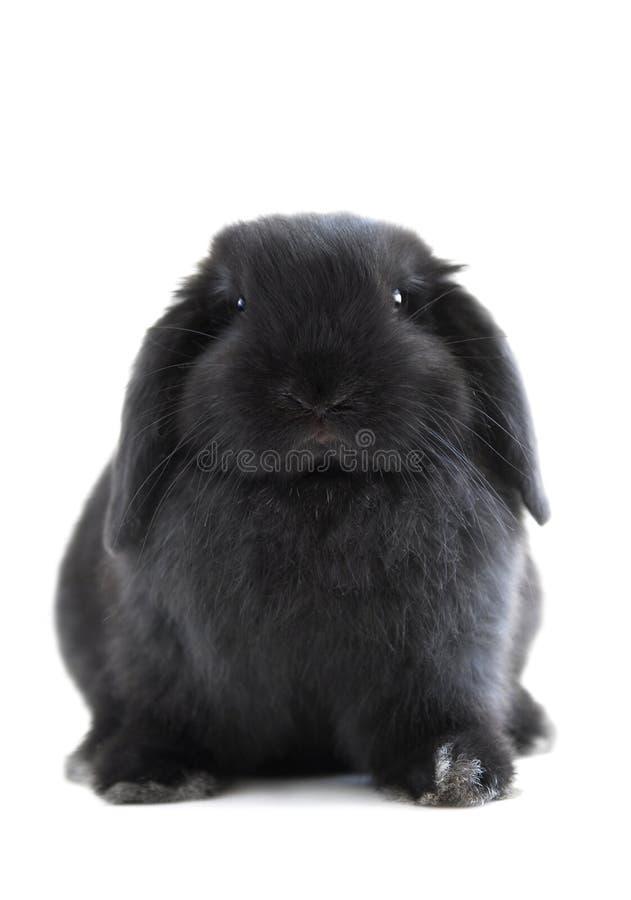 Bunny rabbit stock image