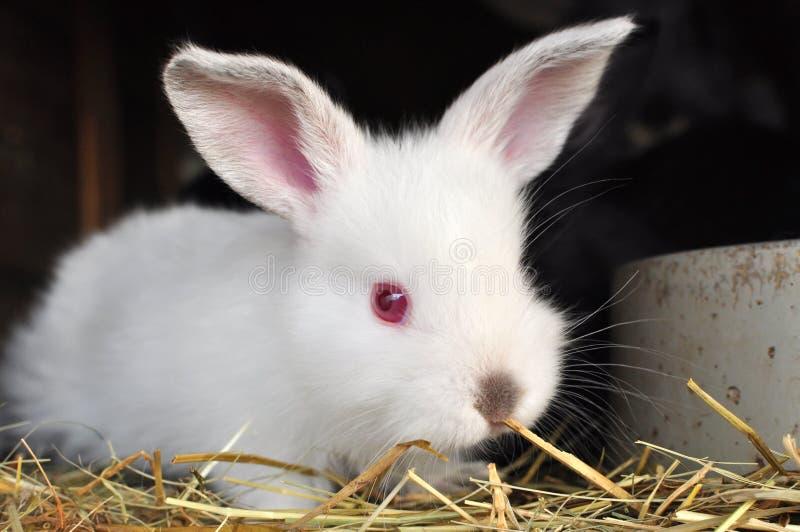 Bunny rabbit stock photos