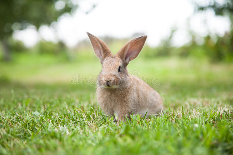 Bunny rabbit on the grass. Close up stock photos