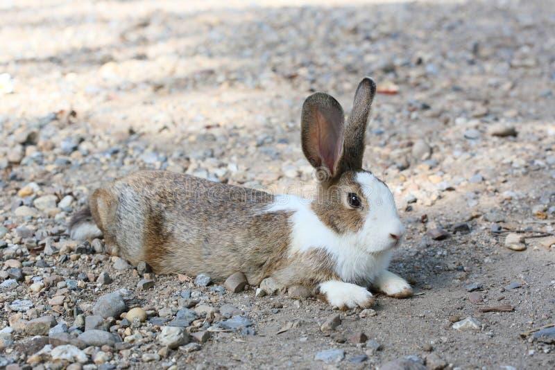 Download Bunny rabbit stock image. Image of animal, spring, sylvaticus - 31894623