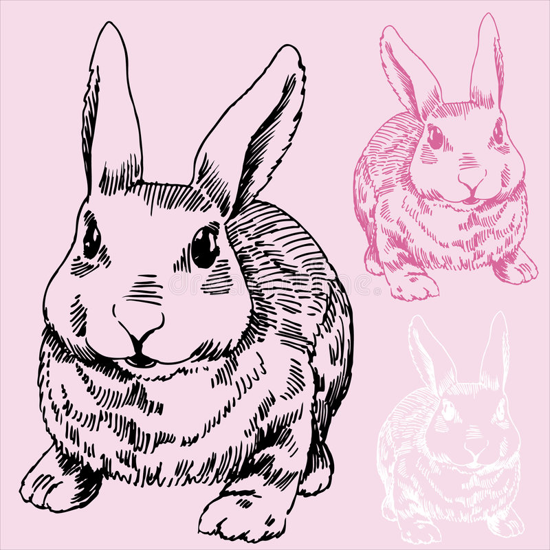 Bunny / Rabbit Sketch royalty free stock image