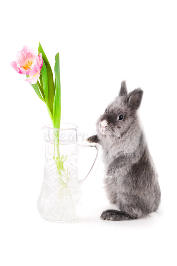 Bunny standing near the vase royalty free stock image
