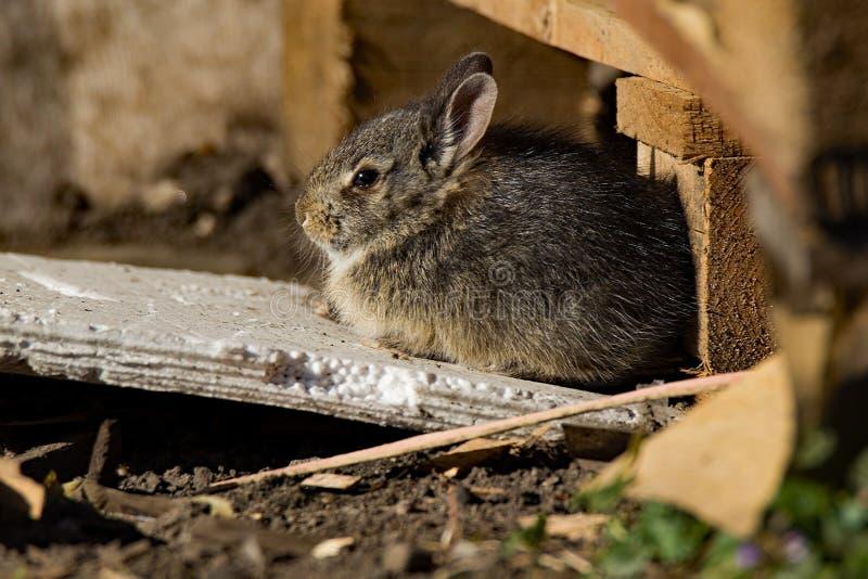 Bunny Sunbathing images stock