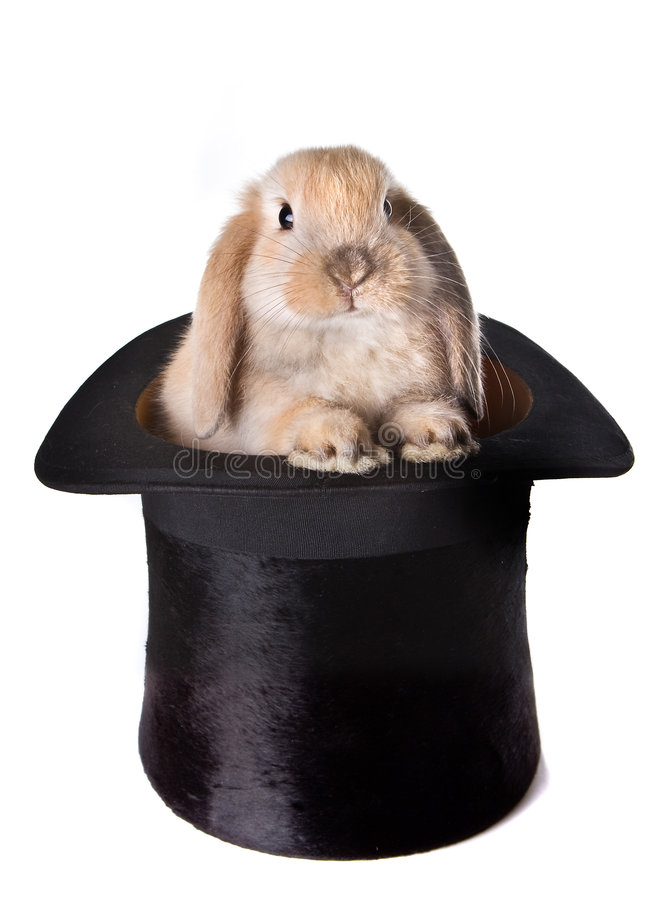 Bunny surprise. Little easter bunny as a surprise in a top hat royalty free stock photos