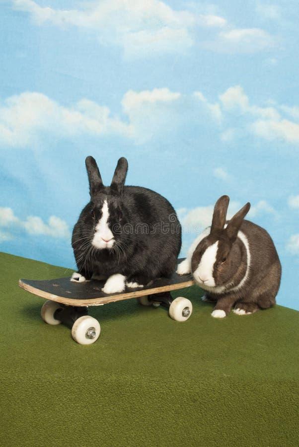 Bunny Team em um skate imagens de stock royalty free