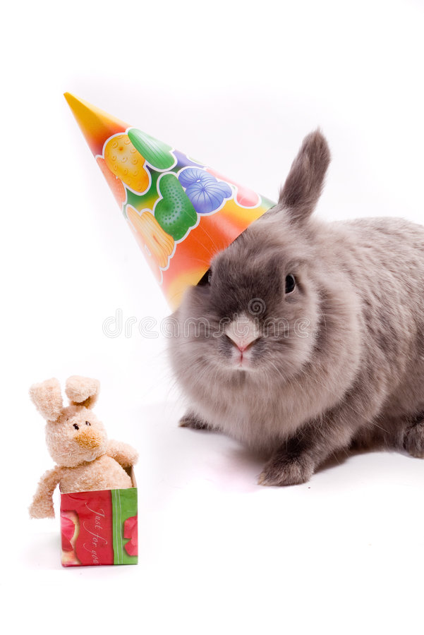 Bunny and a toy-bunny in the box royalty free stock photography