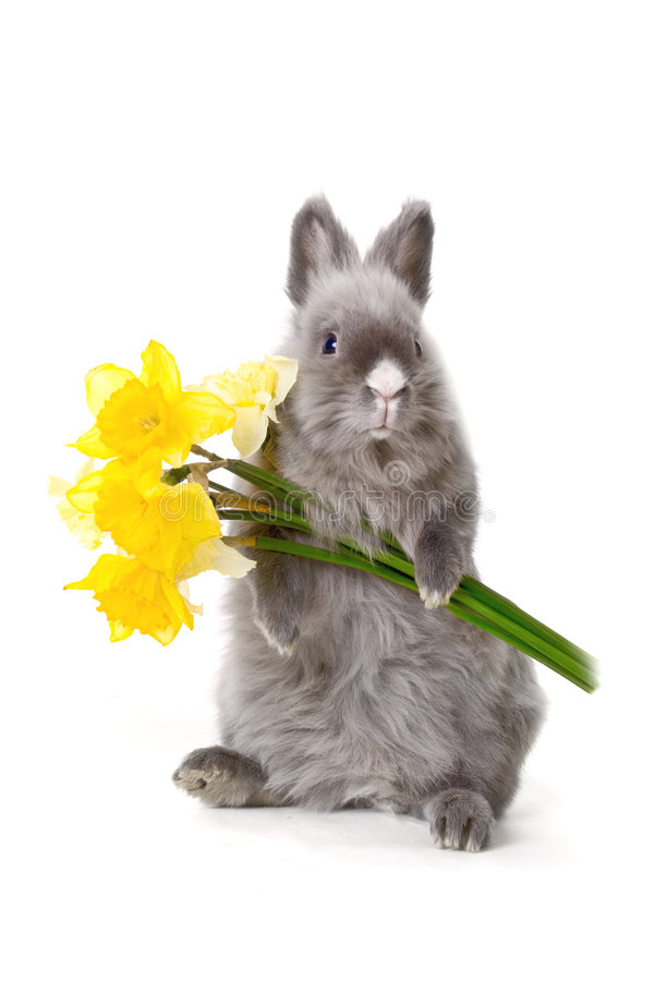 Bunny with yellow flowers stock photo