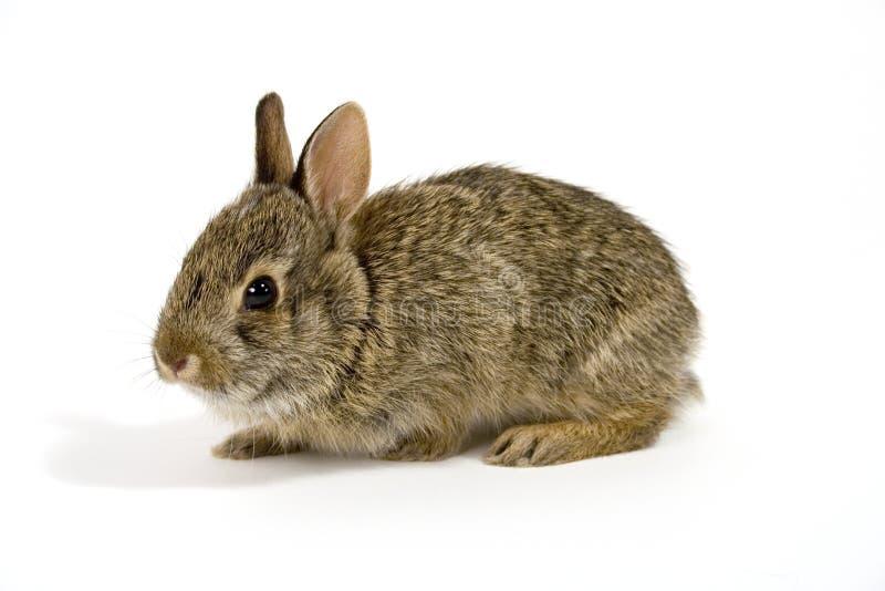 Bunny1 photographie stock libre de droits