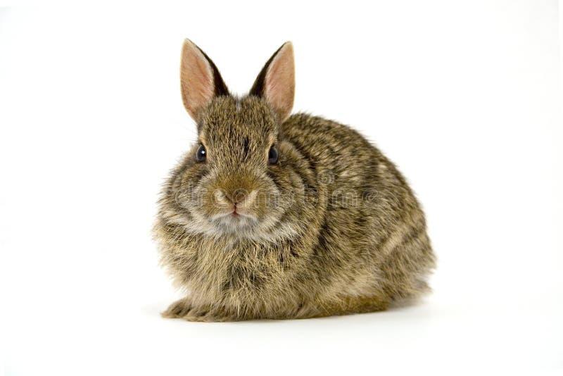 Bunny6 stockbilder
