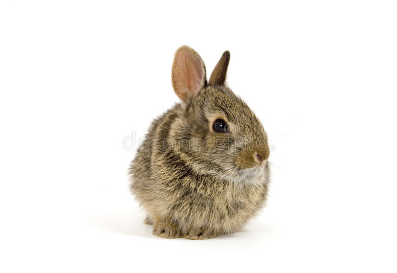 Bunny7 stock photography