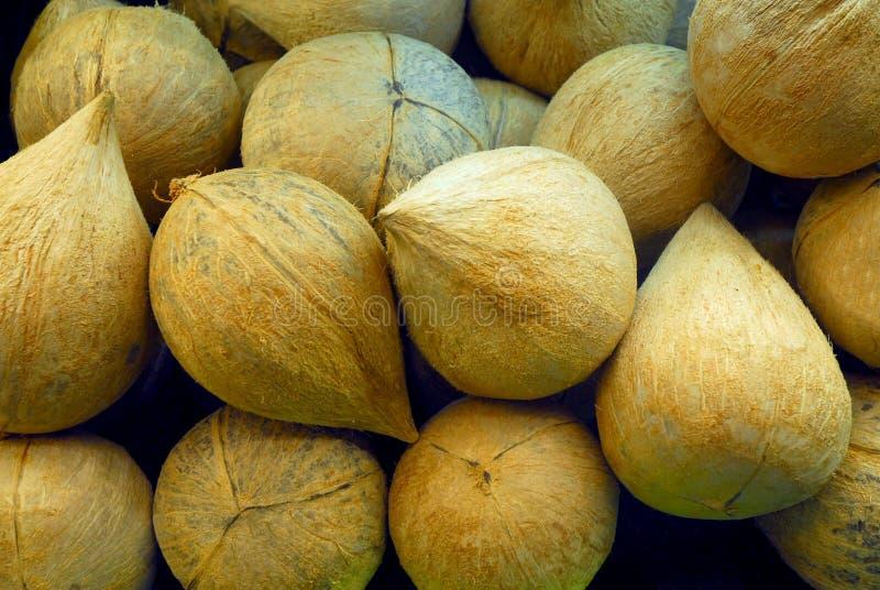 Bunt av kokosnötter