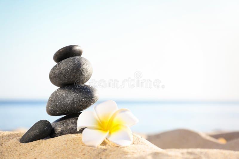Bunt av mörka stenar och den härliga blomman på den sandiga stranden nära havet Zenbegrepp arkivfoto