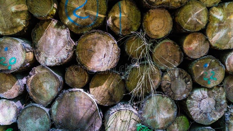 Bunt av roundwood arkivfoton