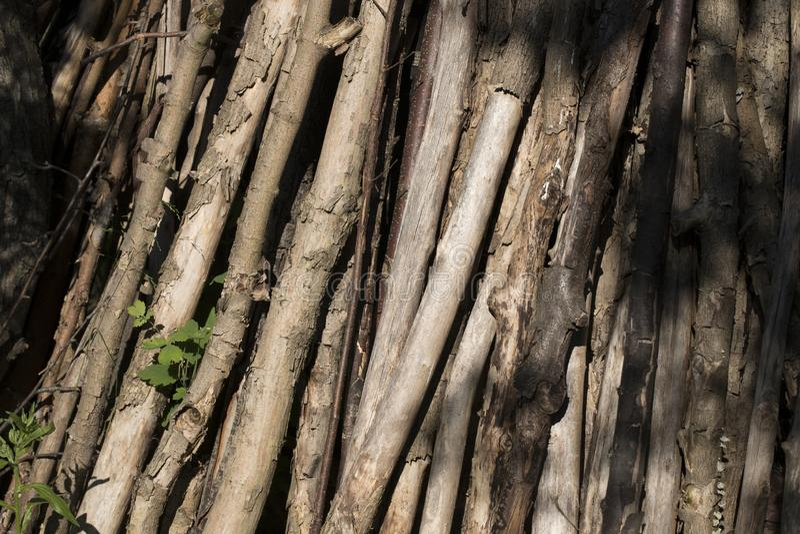 Bunt av torkat tr? royaltyfri bild