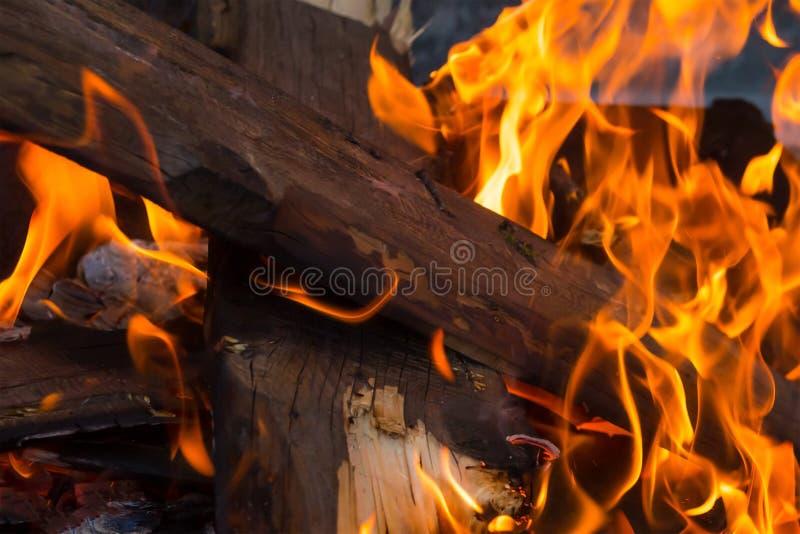 Bunt av vedträ höga tungor för en ljus flamma av den orange brandbakgrundspicknicken som lagar mat på en brand fotografering för bildbyråer