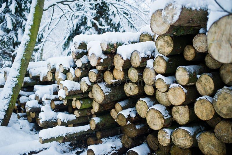 Bunt av wood stora bitar som täckas med snö Vinter arkivfoton