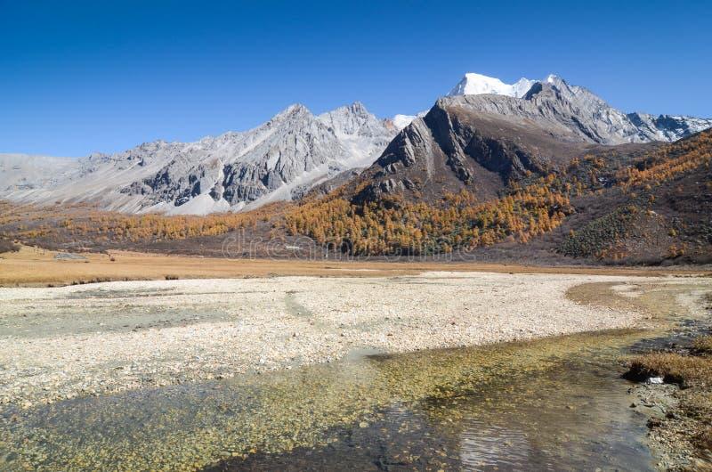 Bunt im Herbstwald und im Schneeberg am Yading-Naturreservat lizenzfreies stockfoto