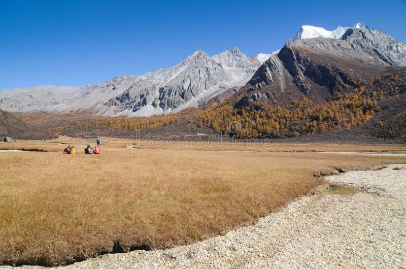 Bunt im Herbstwald und im Schneeberg am Yading-Naturreservat stockbilder