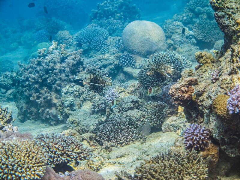 Bunt unter dem Wasserleben im Roten Meer, Aqaba, Jordanien stockfotos