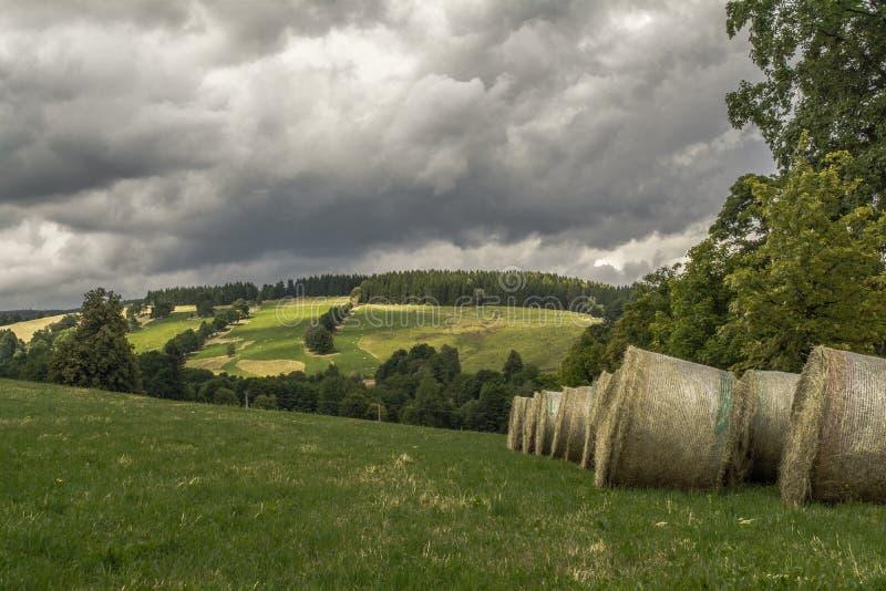 Buntar av sugrör efter skörd fotografering för bildbyråer