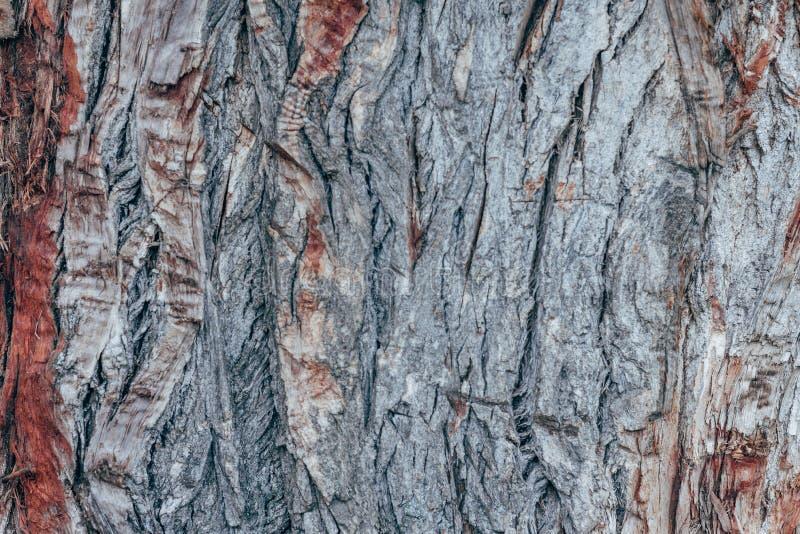 Bunte abstrakte Musterbeschaffenheit der Baumrinde stockfoto