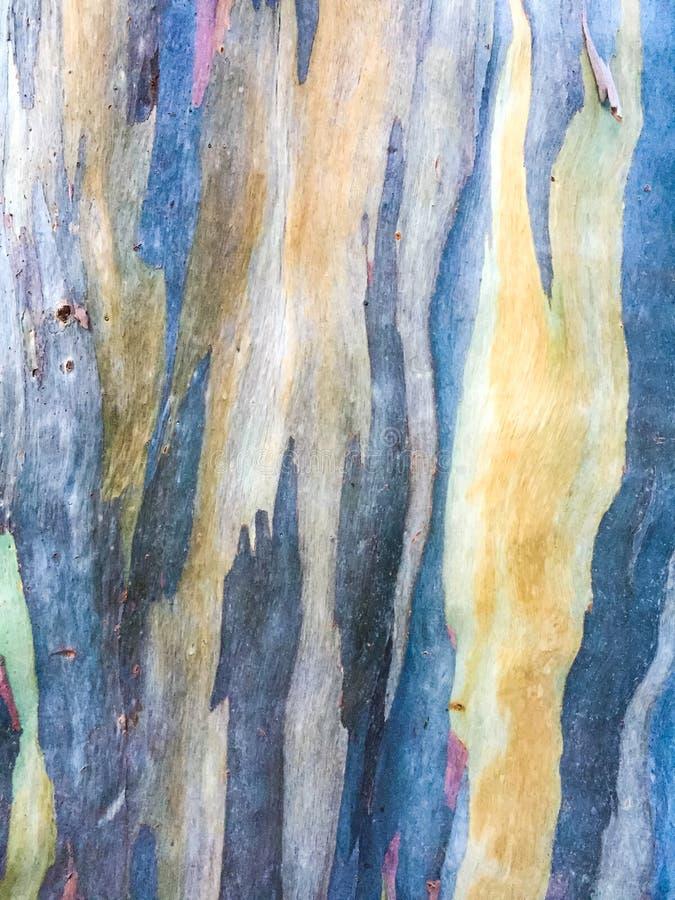 Bunte abstrakte Musterbeschaffenheit der Eukalyptusbaumrinde lizenzfreie stockbilder