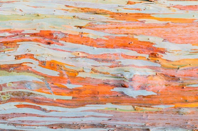 Bunte abstrakte Musterbeschaffenheit der Eukalyptusbaumrinde stockbild