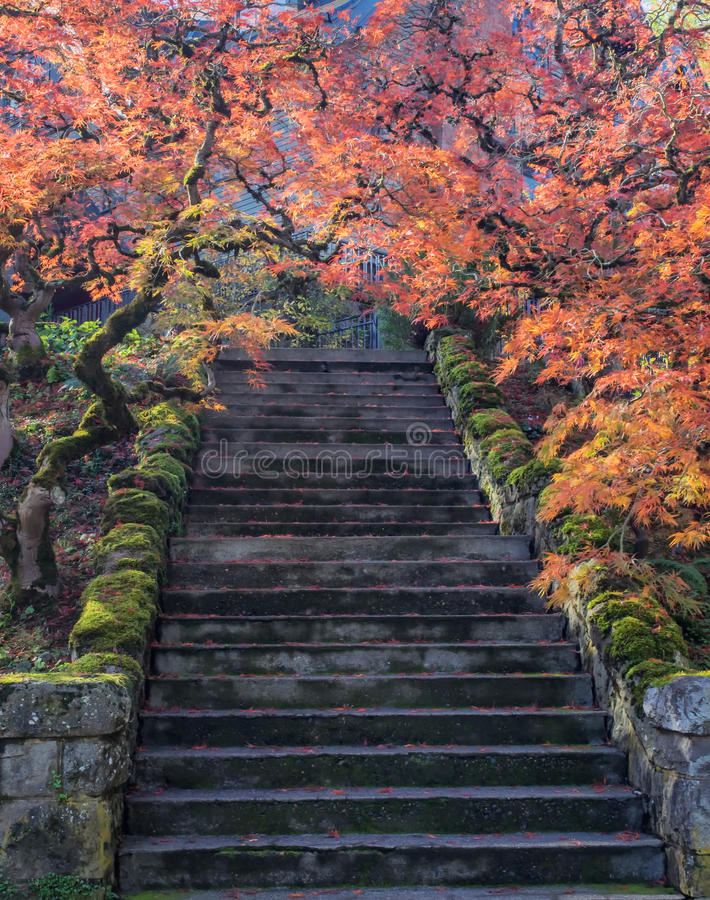 Bunte Ahornblätter entlang einem Flug der Treppe lizenzfreies stockbild