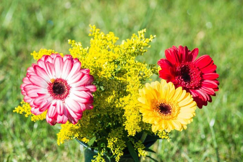 Bunte anders als farbige Herbstblumen lizenzfreie stockfotos