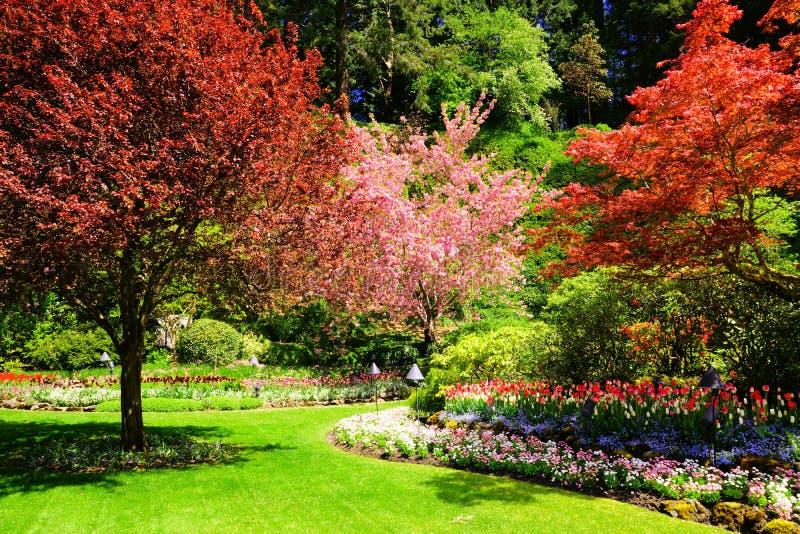 Bunte Bäume und Blumen eines schönen landschaftlich gestalteten Gartens während des Frühlinges stockfotografie