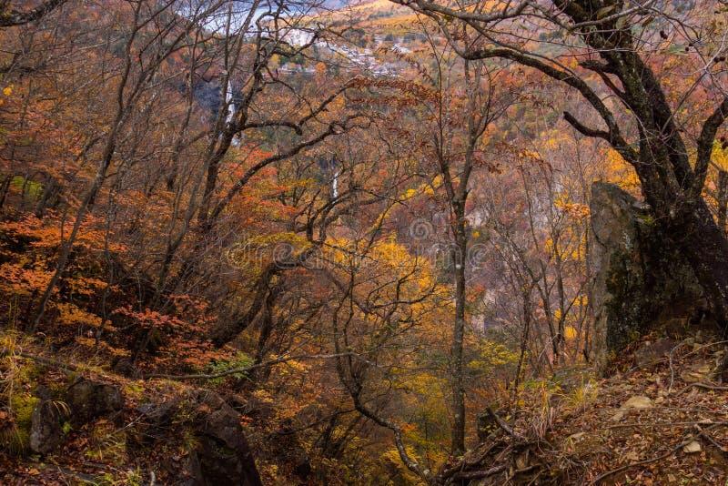 Bunte Bäume Waldin der schönen gefallenen Blatt-Herbstnatur stockfotografie