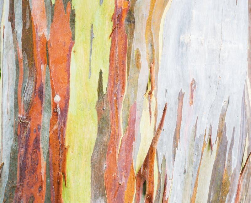 Bunte Baumrinde auf Natur stockbilder