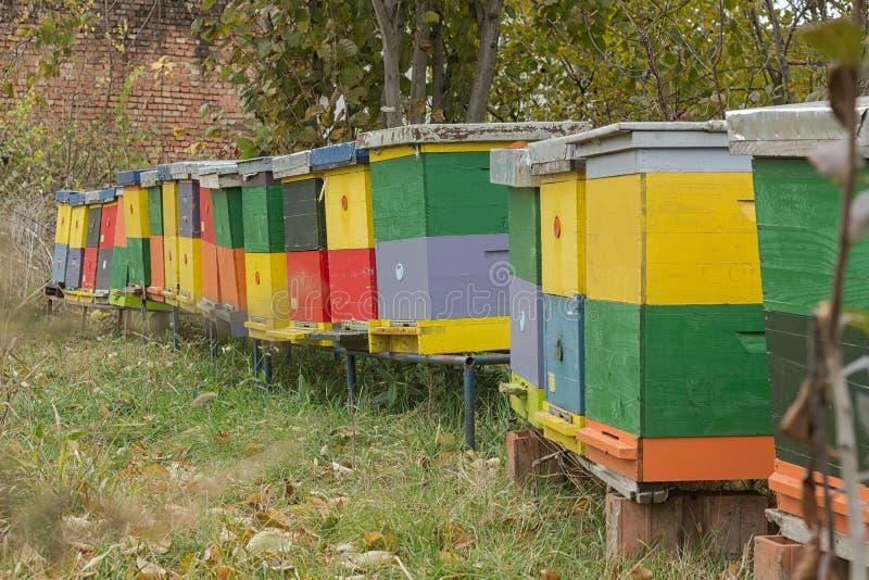 Bunte Bienenstockkolonie lizenzfreies stockbild