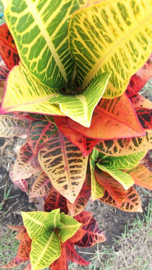 Bunte Blätter stockfotos