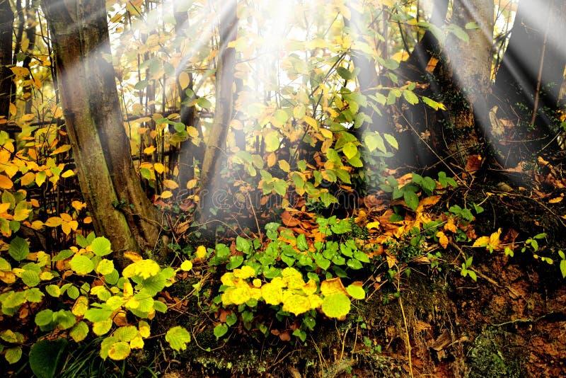 Bunte Blätter im Herbst stockfoto
