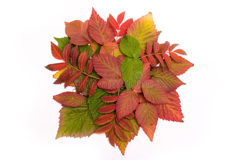 Bunte Blätter im Herbst steigung isolat stockfotos