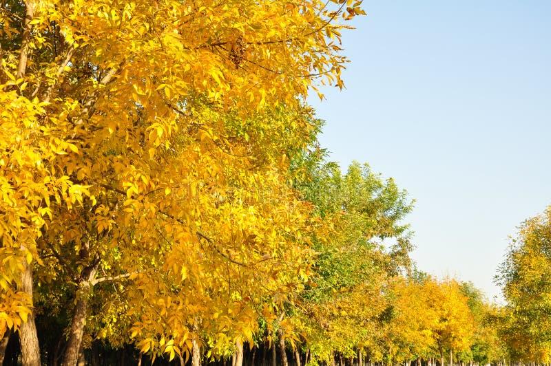 Bunte Blätter im Herbst- und Morgensonnenlicht lizenzfreie stockbilder