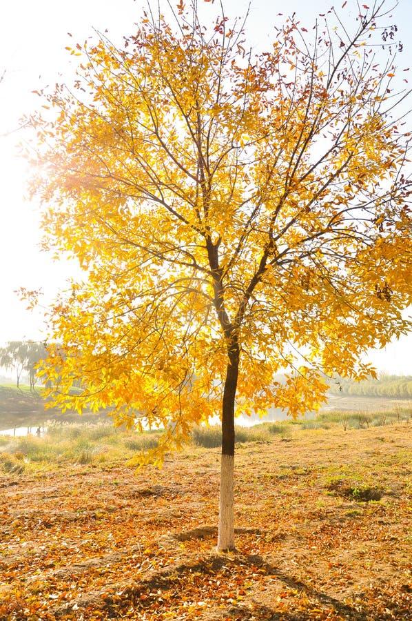 Bunte Blätter im Herbst- und Morgensonnenlicht lizenzfreies stockfoto