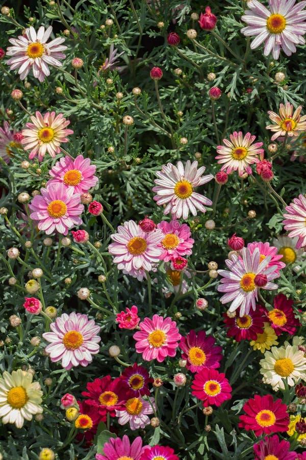 Bunte blühende wilde Frühlingsblumen in der Ansicht stockfotografie