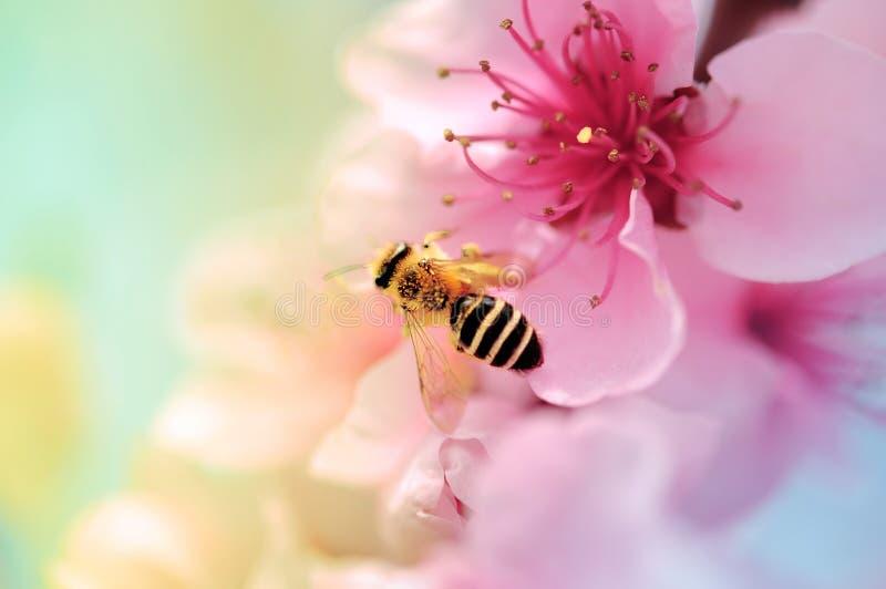 Bunte Blüte und Honigbiene lizenzfreie stockfotografie
