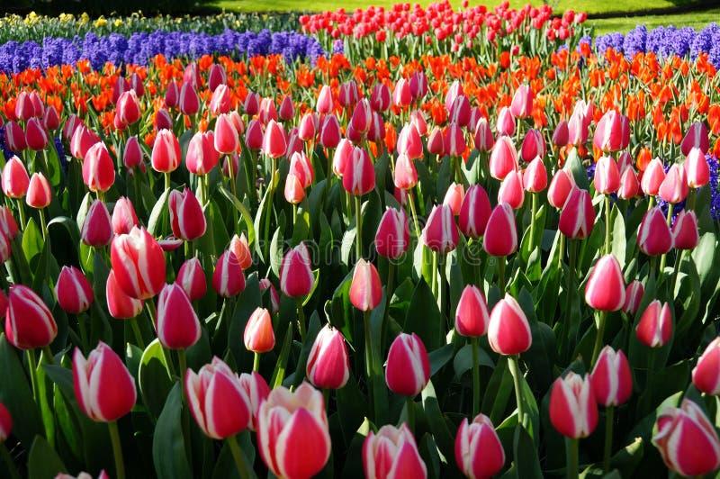 Bunte Blume stockfotografie