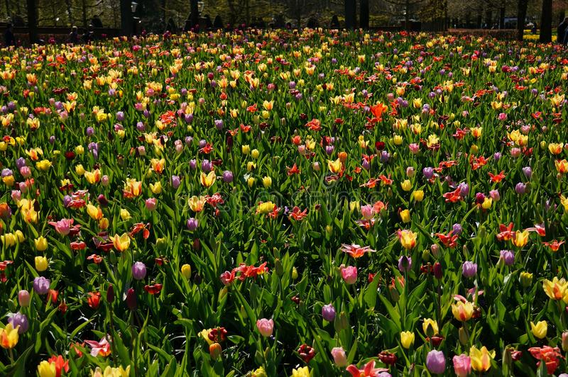Bunte Blume lizenzfreie stockfotos