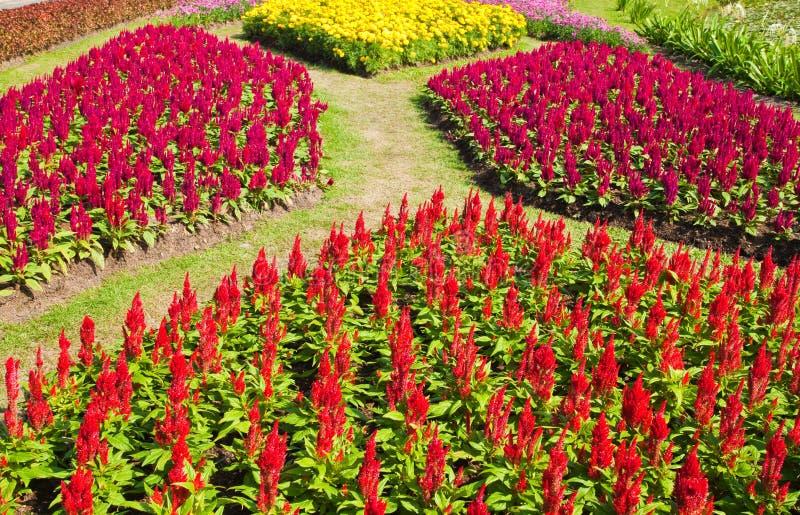 Bunte Blume stockbild