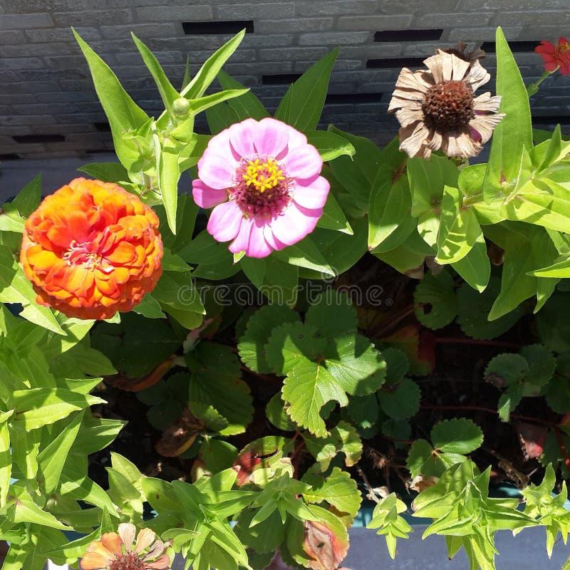 Bunte Blumen stockfotos
